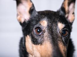 Koiran ongelmakäyttäytyminen