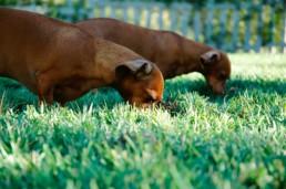 Koiran virikkeet, koira harrastukset